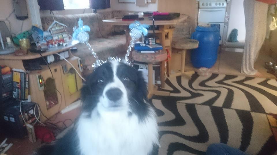 festivedog