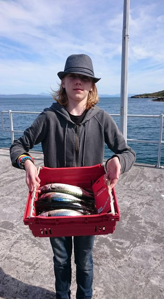 mackerel haul