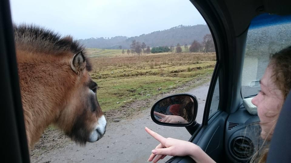 pretzel pony